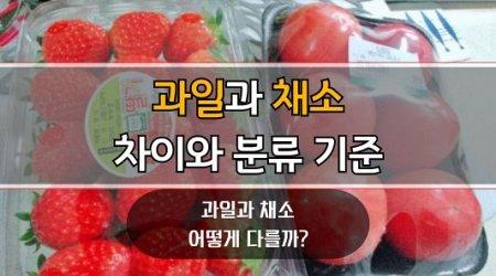 과일-채소-차이와-분류-기준